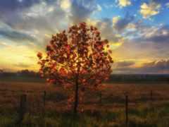 дерево, widescreen, pictures