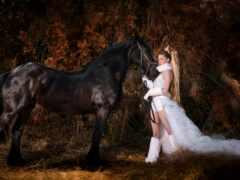 pexel, stallion, russian