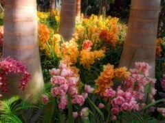 коллекция, garden, цвета
