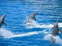 дельфина, брызги, animal
