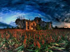 house, abandoned, поле
