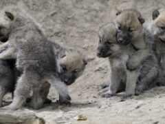 волчата, you, волчат