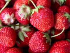 red, клубника, ягода
