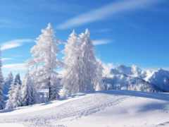 winter, снег, год