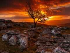 дерево, закат, lose