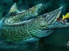щука, fish, рыбалка
