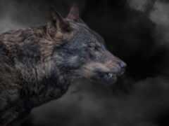 ухмылка, волк