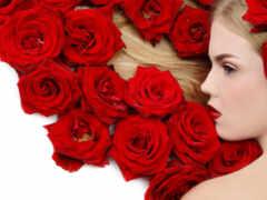 роза, oir, шиповник