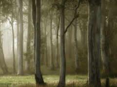 лес, фото, деревя
