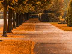 осень, dubstep, аллеи