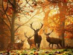 осень, золотая, природа