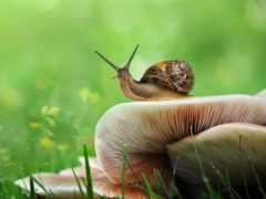 грибы, улитки, snail