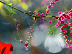 aid, цветы, branch