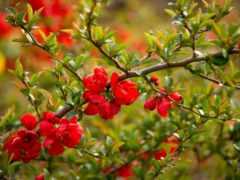 природа, макро, весна