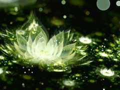 lotus, cvety, лотоса