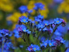 цветы, flore, azui