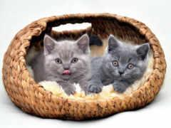 кот, pinterest, котенка