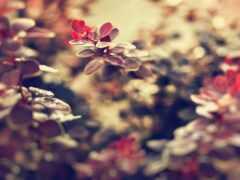 листья, веточка