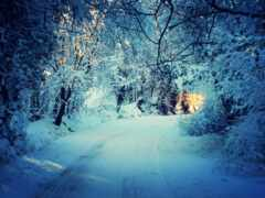 winter, scene, снег