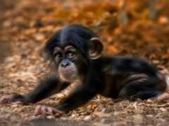 милые, обезьянки, zhivotnye
