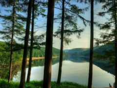 marcello, природа, лес