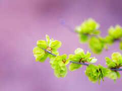 весна, лист, природа