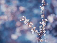makryi, цветы, branch