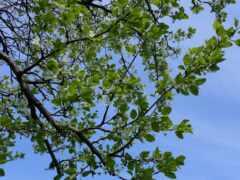 дерево, wikipediatree, definition