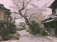 япония, деревня, лепестки