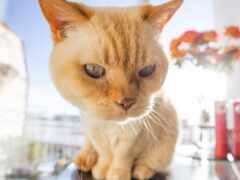 кот, картинка, animal