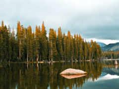 деревьев, верхушки, озеро