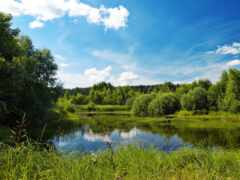 природа, summer, лес