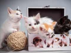 котенок, монитор, кот