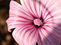 цветы, розовый, песочница