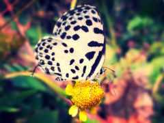 бабочка, природа, animal