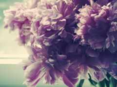 пион, цветок, abstrakciya