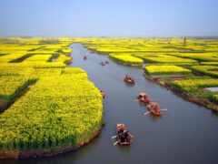 фото, красивый, китаянка