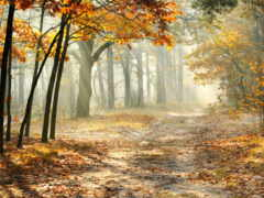 лист, картинка, осень