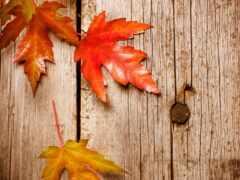 пасть, осень, магнит