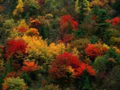 природа, осень, телефон