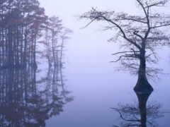 bíblia, туман, home