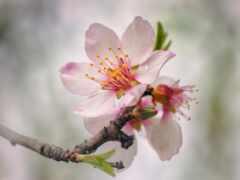 цветение, branch, funart