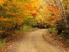 osen, листь, быть