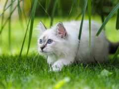кот, postcard, white
