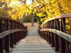 puente, осень, flash