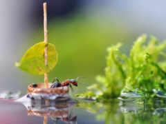 ant, лодка, row
