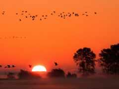 туман, amazon, птица