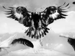 орел, птица, art