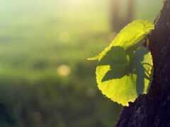 росток, дерево, sun