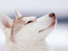 perros, más, mundo